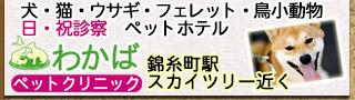 犬猫小動物病院墨田区